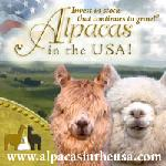 Alpacas in the USA
